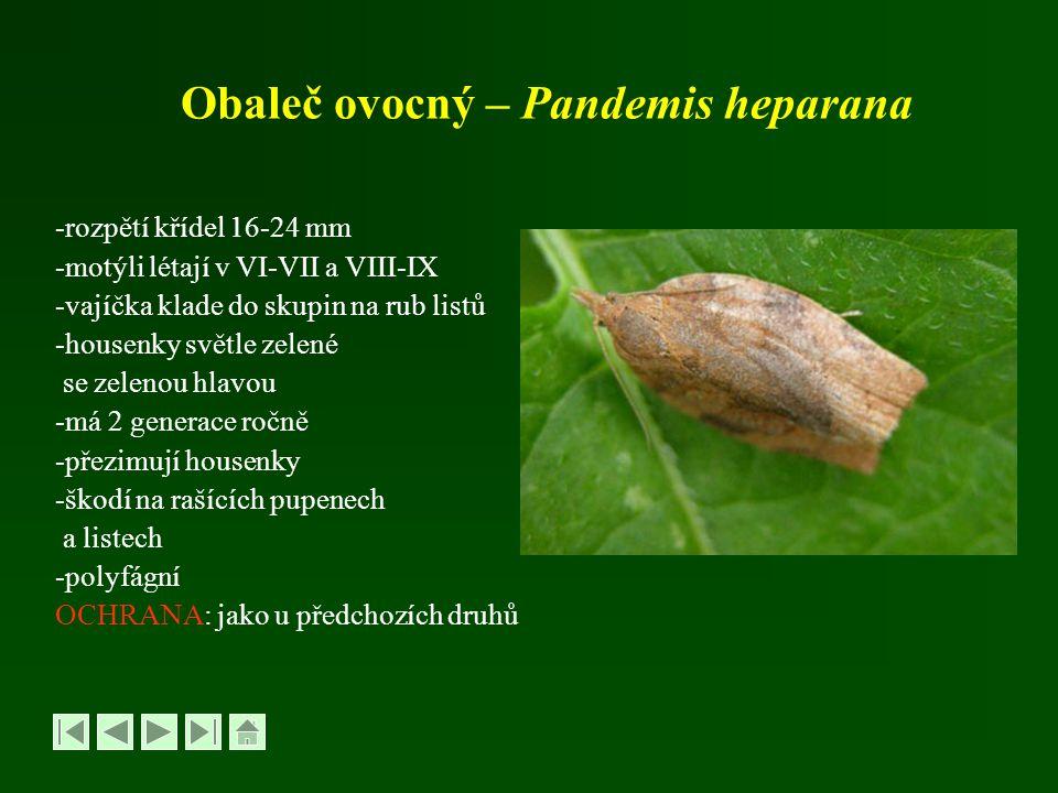 Obaleč ovocný – Pandemis heparana -rozpětí křídel 16-24 mm -motýli létají v VI-VII a VIII-IX -vajíčka klade do skupin na rub listů -housenky světle ze