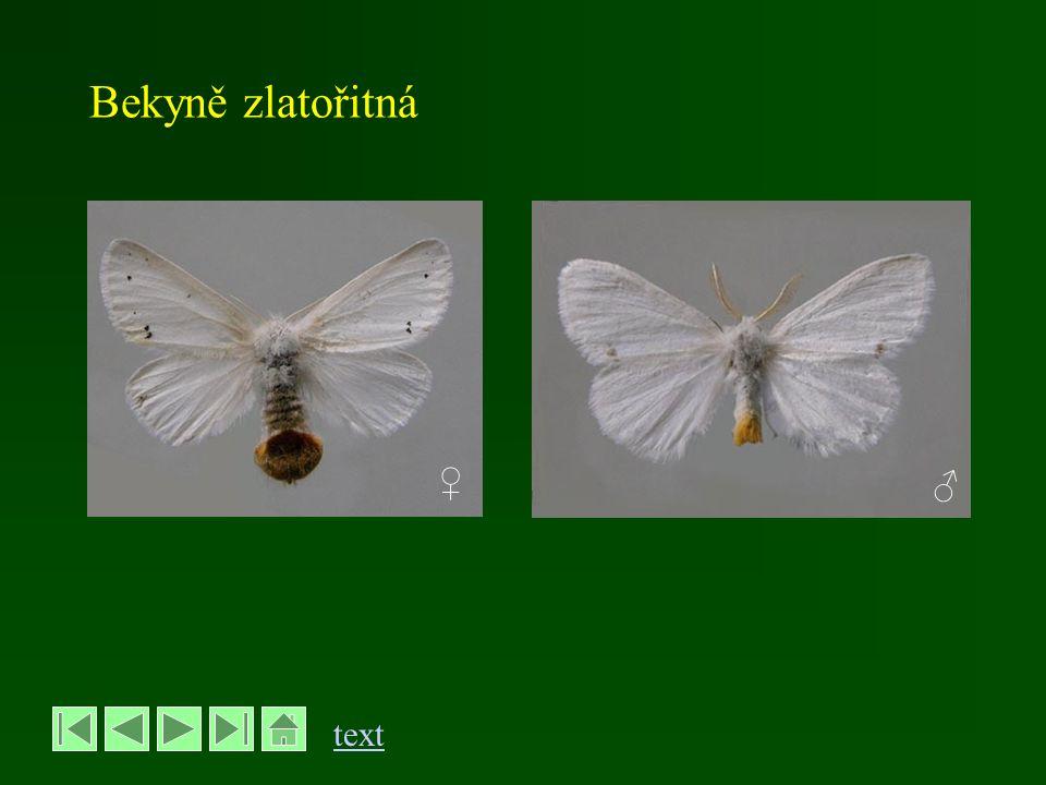 Přástevníček americký - Hyphantria cunea řád Motýli – Lepidoptera, čeleď Přástevníkovití - Arctiidae - rozpětí křídel 30-40 mm - bílý, samci s černými skvrnami na předních křídlech - přezimují kukly - ročně má 2 generace - motýli 1.