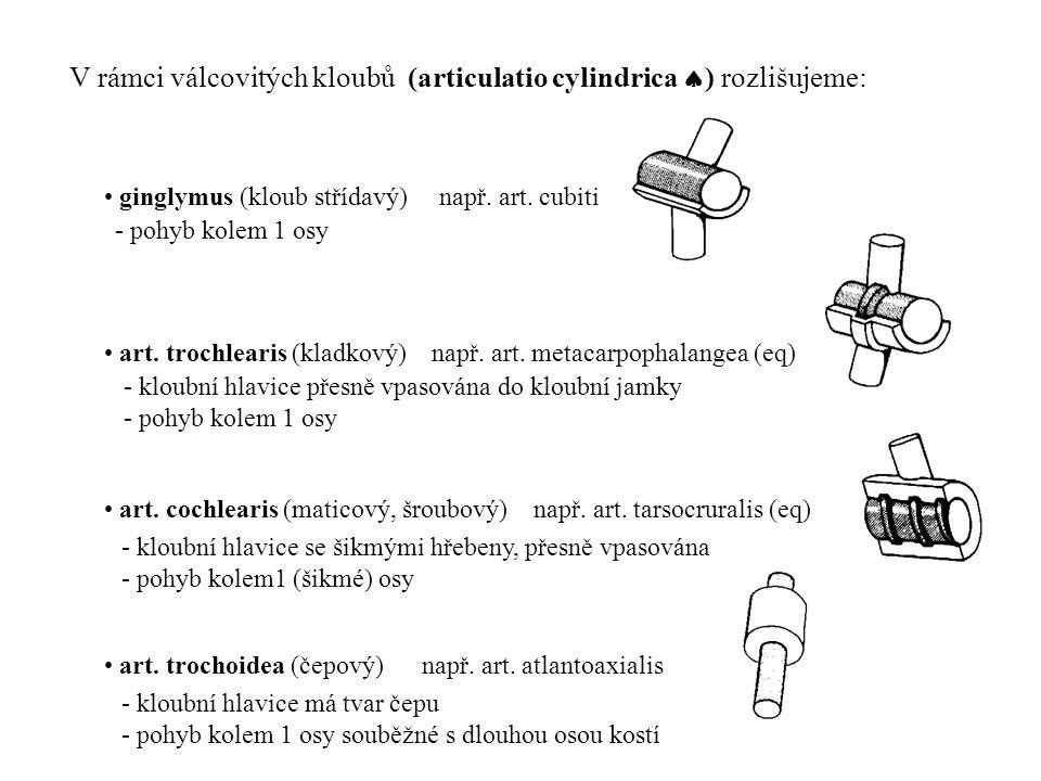 V rámci válcovitých kloubů (articulatio cylindrica  ) rozlišujeme: • ginglymus (kloub střídavý) např. art. cubiti • art. trochlearis (kladkový) např.