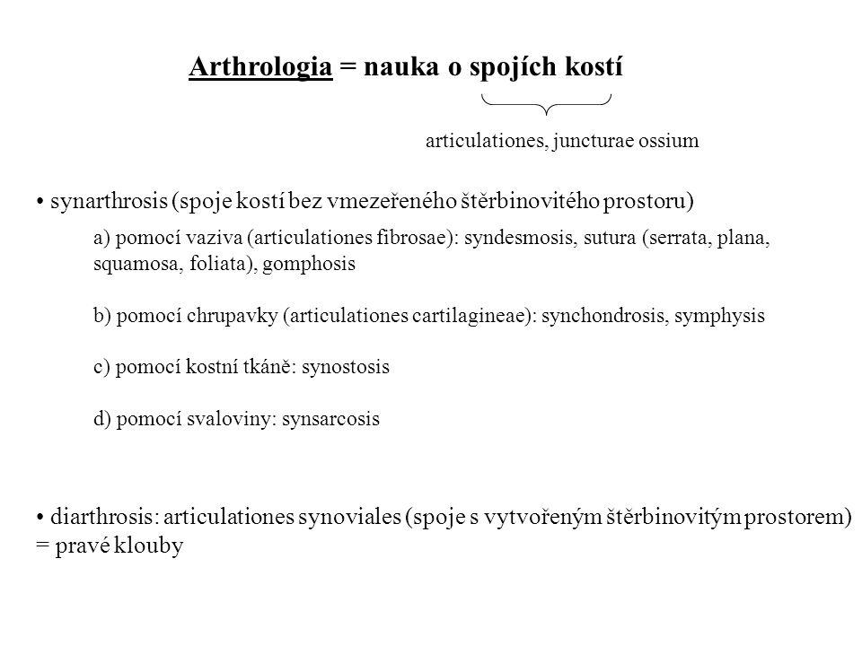 Arthrologia = nauka o spojích kostí articulationes, juncturae ossium • synarthrosis (spoje kostí bez vmezeřeného štěrbinovitého prostoru) • diarthrosi