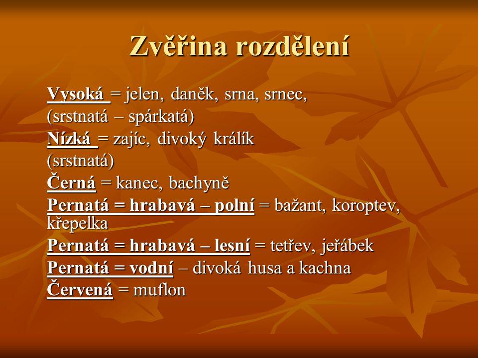 Zvěřina rozdělení Vysoká = jelen, daněk, srna, srnec, (srstnatá – spárkatá) Nízká = zajíc, divoký králík (srstnatá) Černá = kanec, bachyně Pernatá = hrabavá – polní = bažant, koroptev, křepelka Pernatá = hrabavá – lesní = tetřev, jeřábek Pernatá = vodní – divoká husa a kachna Červená = muflon