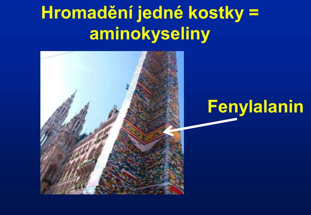 Hromadění jedné kostky = aminokyseliny Fenylalanin