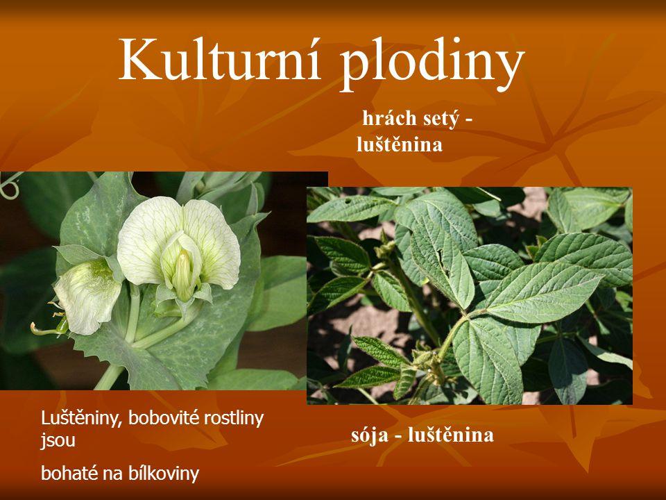Kulturní plodiny hrách setý - luštěnina sója - luštěnina Luštěniny, bobovité rostliny jsou bohaté na bílkoviny