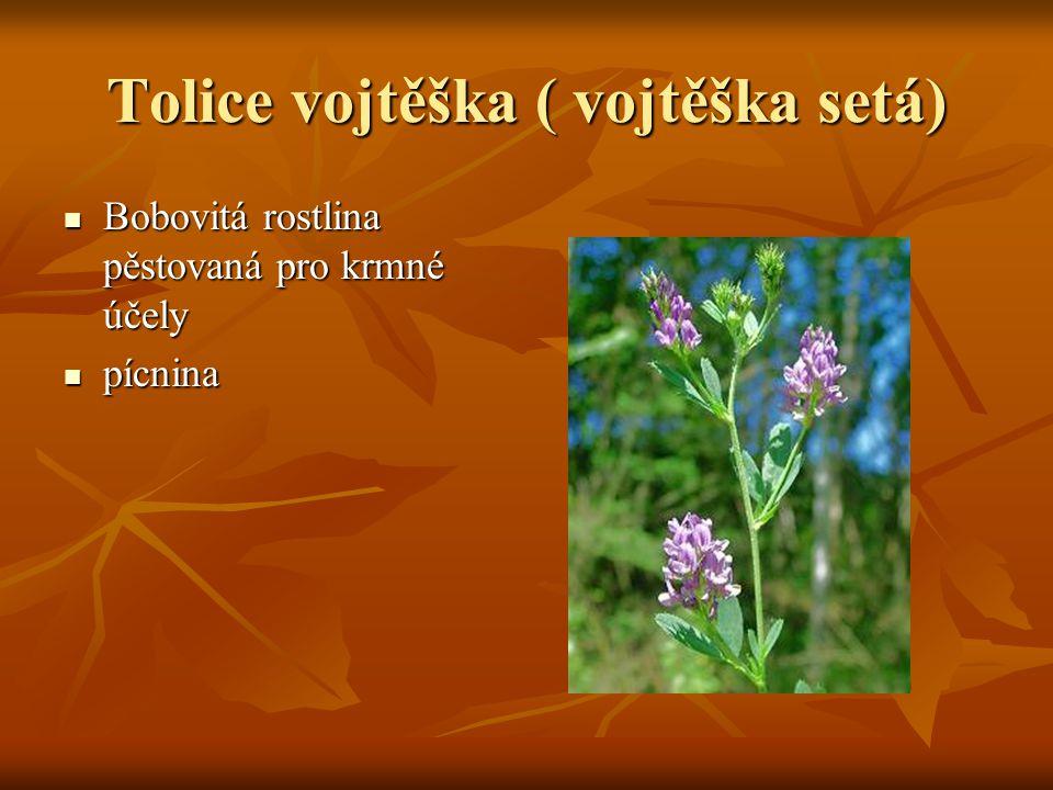 Tolice vojtěška ( vojtěška setá)  Bobovitá rostlina pěstovaná pro krmné účely  pícnina