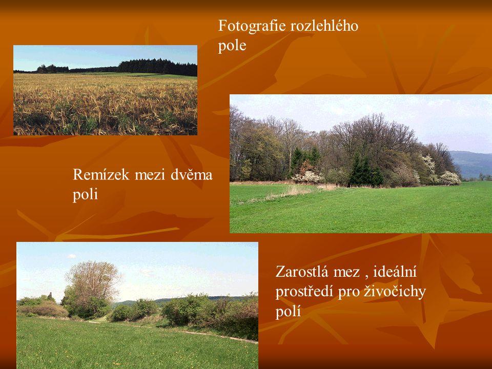 Fotografie rozlehlého pole Remízek mezi dvěma poli Zarostlá mez, ideální prostředí pro živočichy polí