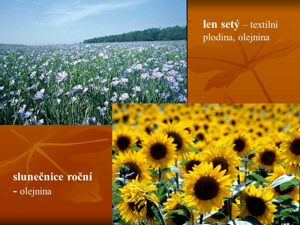 len setý – textilní plodina, olejnina slunečnice roční - olejnina