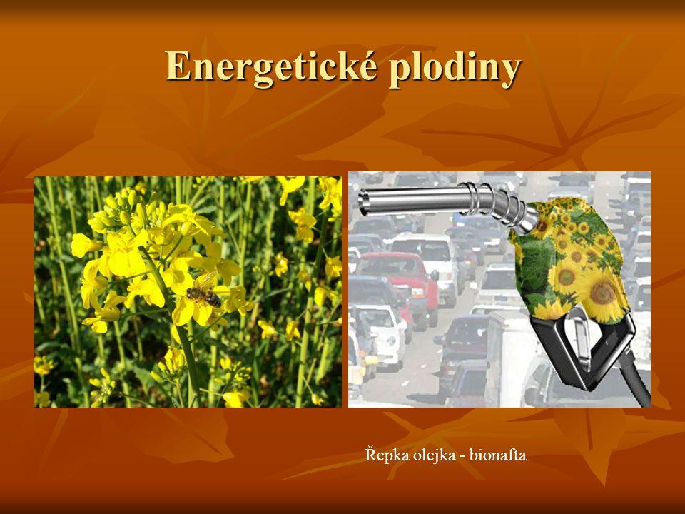 Energetické plodiny Řepka olejka - bionafta