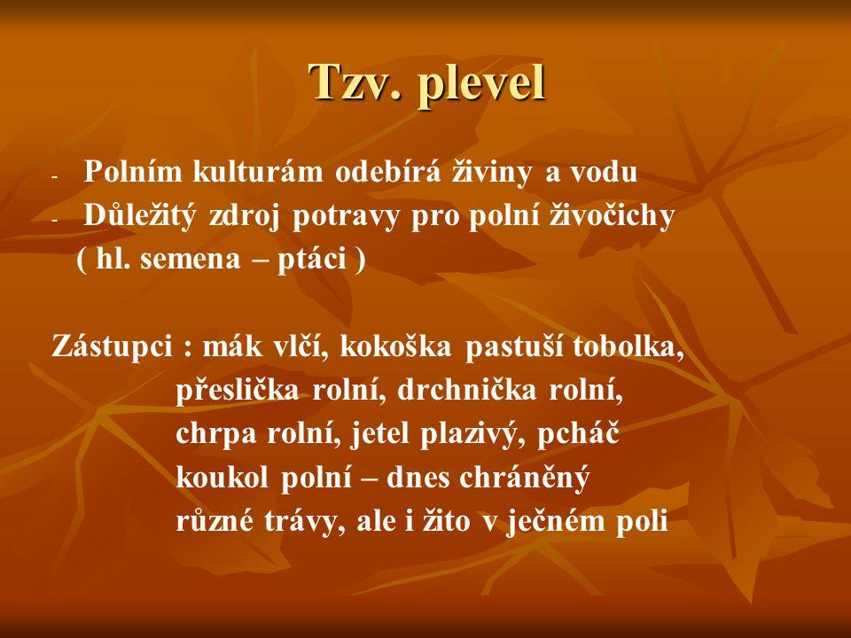 Tzv. plevel - - Polním kulturám odebírá živiny a vodu - - Důležitý zdroj potravy pro polní živočichy ( hl. semena – ptáci ) Zástupci : mák vlčí, kokoš