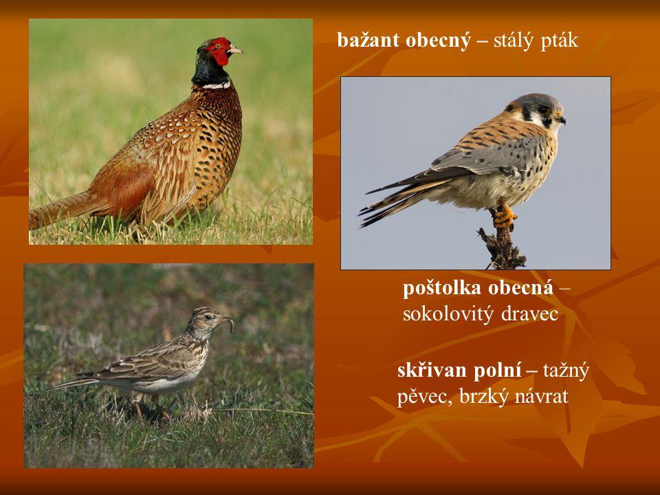 bažant obecný – stálý pták poštolka obecná – sokolovitý dravec skřivan polní – tažný pěvec, brzký návrat