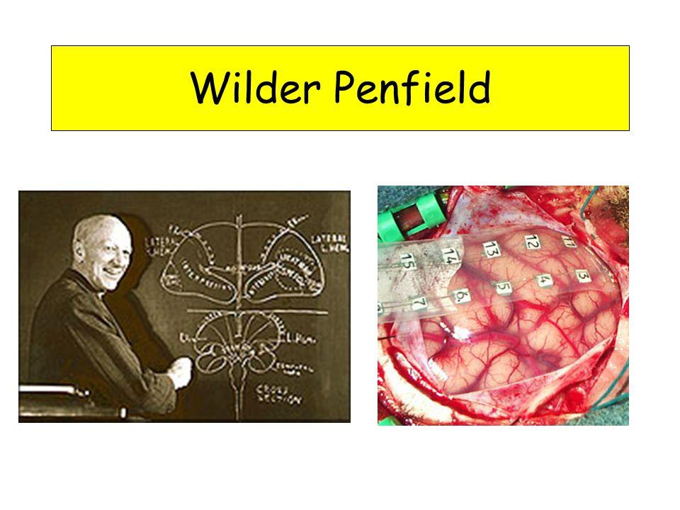 Wilder Penfield