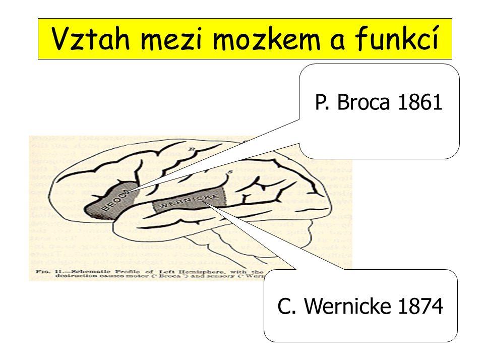 P. Broca 1861 C. Wernicke 1874 Vztah mezi mozkem a funkcí
