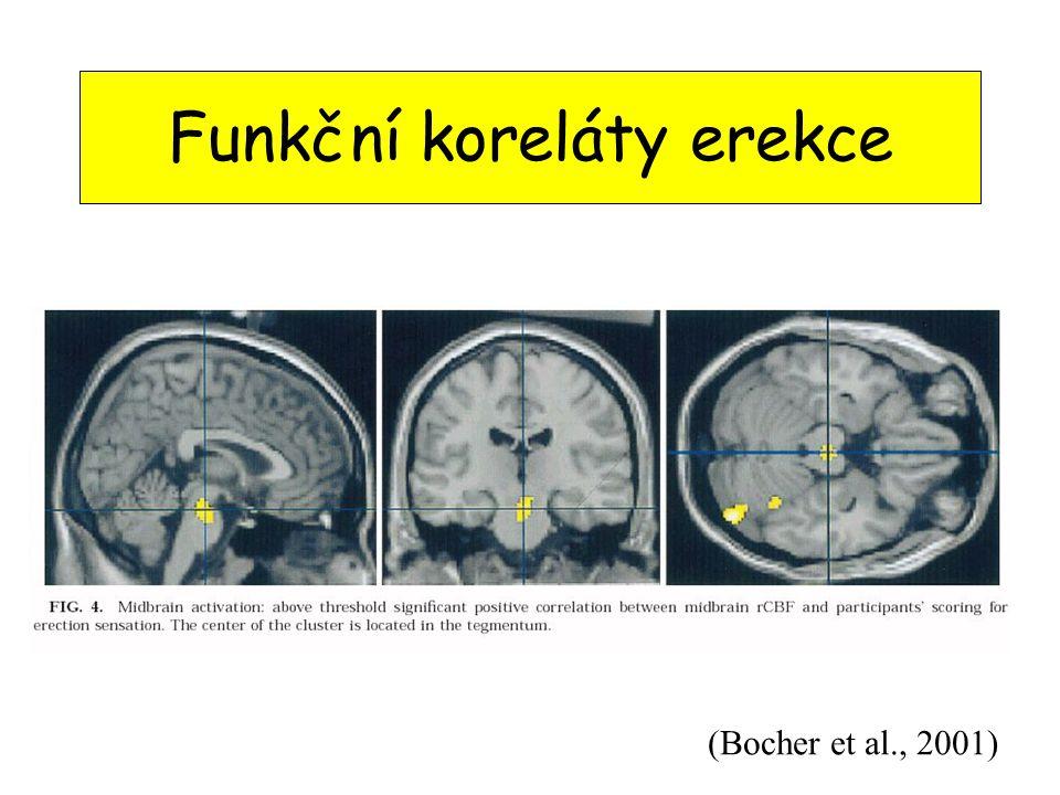 Funkční koreláty erekce (Bocher et al., 2001)