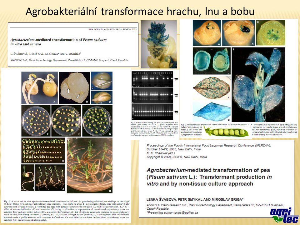 Agrobakteriální transformace hrachu, lnu a bobu