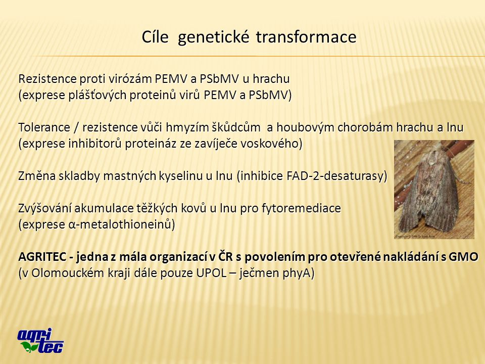 Cíle genetické transformace Rezistence proti virózám PEMV a PSbMV u hrachu (exprese plášťových proteinů virů PEMV a PSbMV) Tolerance / rezistence vůči hmyzím škůdcům a houbovým chorobám hrachu a lnu (exprese inhibitorů proteináz ze zavíječe voskového) Změna skladby mastných kyselinu u lnu (inhibice FAD-2-desaturasy) Zvýšování akumulace těžkých kovů u lnu pro fytoremediace (exprese α-metalothioneinů) AGRITEC - jedna z mála organizací v ČR s povolením pro otevřené nakládání s GMO (v Olomouckém kraji dále pouze UPOL – ječmen phyA)