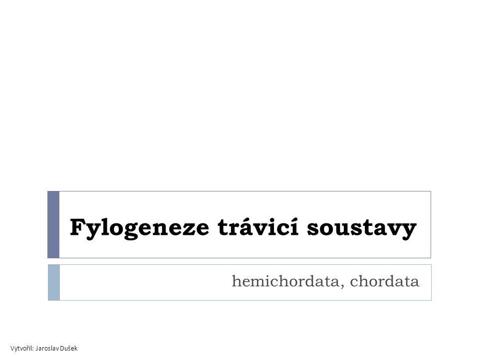 Hemichordata  Enteropneusta (Žaludovci)  polykají písek -> org.