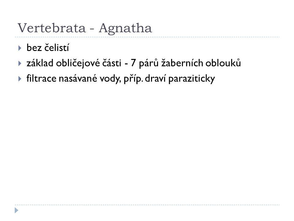 Vertebrata - Agnatha Štítnatci  vymřelí, filtrace potravy