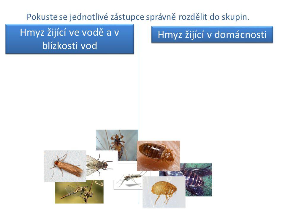 Pokuste se jednotlivé zástupce správně rozdělit do skupin. Hmyz žijící ve vodě a v blízkosti vod Hmyz žijící v domácnosti