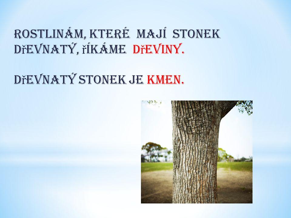 Rostlinám, které mají stonek d ř evnatý, ř íkáme d ř eviny. D ř evnatý stonek je kmen.
