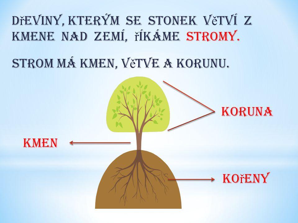 Rostliny, které mají stonek du ž natý, ř íkáme byliny. D ě lí se na : stvol lodyha stéblo