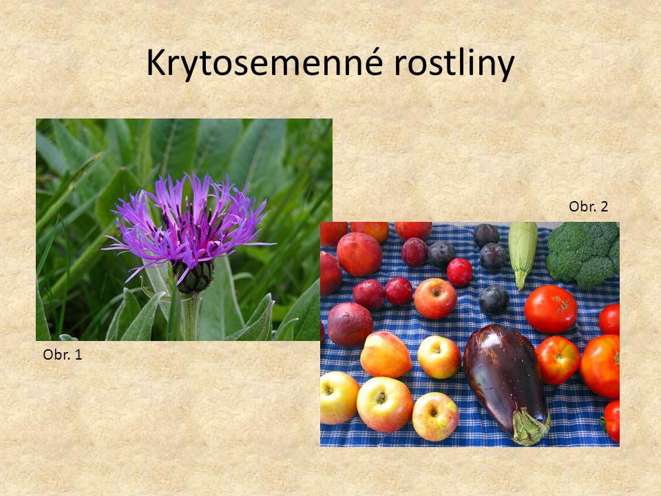 Krytosemenné rostliny Obr. 1 Obr. 2