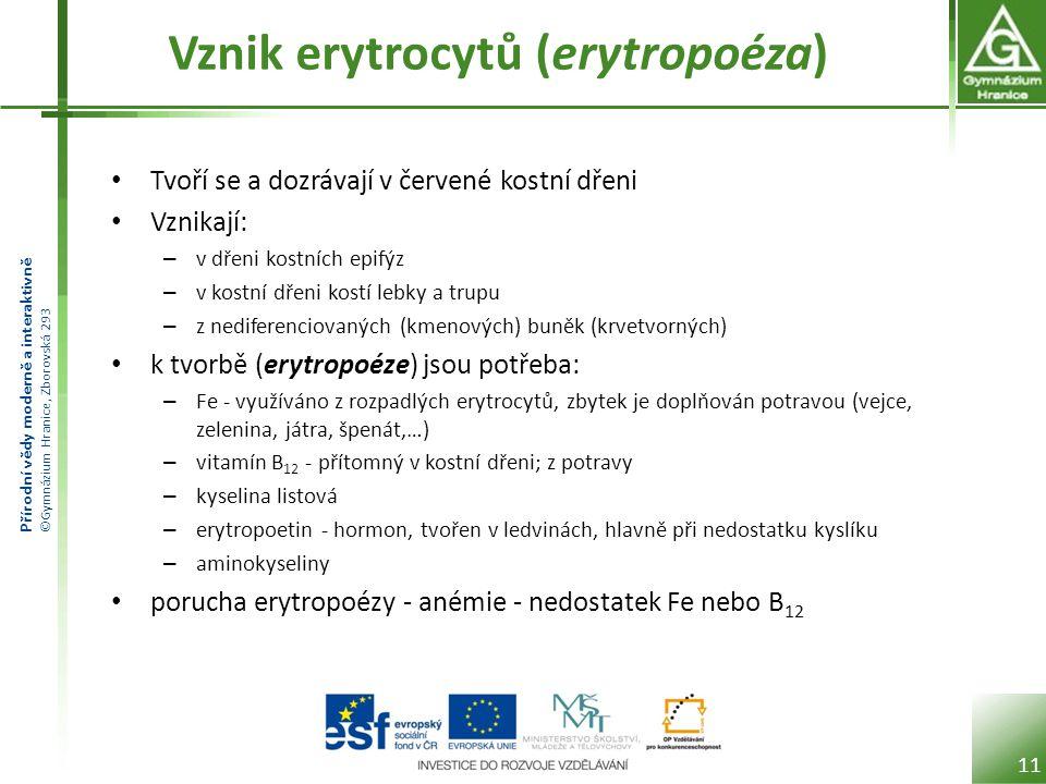 Přírodní vědy moderně a interaktivně ©Gymnázium Hranice, Zborovská 293 Vznik erytrocytů (erytropoéza) • Tvoří se a dozrávají v červené kostní dřeni •