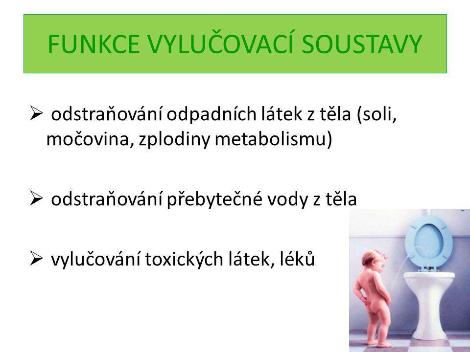 FUNKCE VYLUČOVACÍ SOUSTAVY  odstraňování odpadních látek z těla (soli, močovina, zplodiny metabolismu)  odstraňování přebytečné vody z těla  vylučování toxických látek, léků
