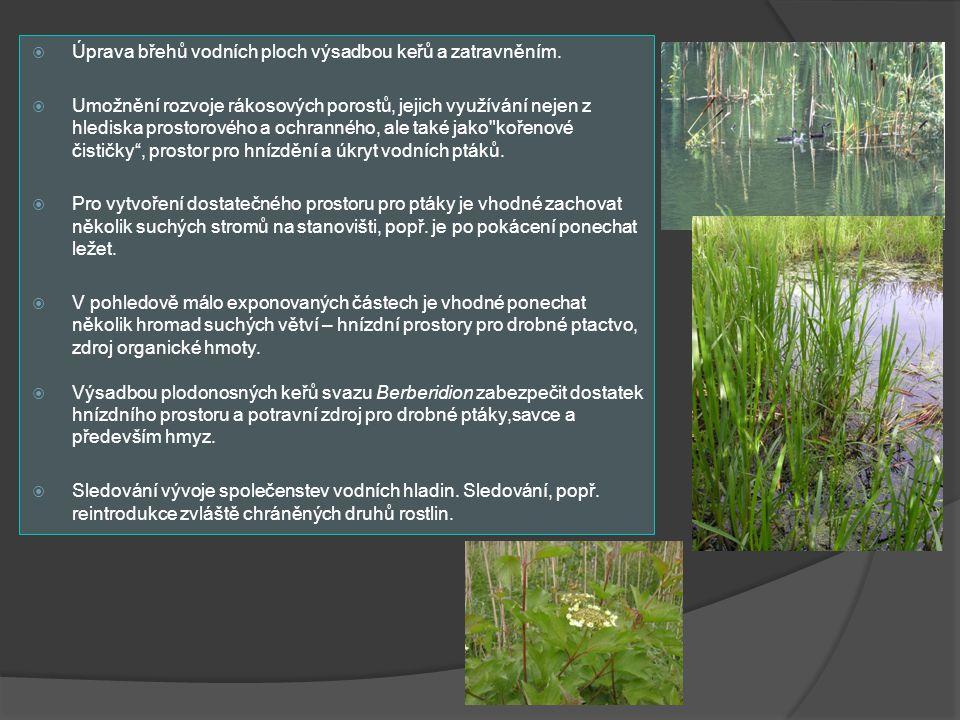  Úprava břehů vodních ploch výsadbou keřů a zatravněním.  Umožnění rozvoje rákosových porostů, jejich využívání nejen z hlediska prostorového a ochr