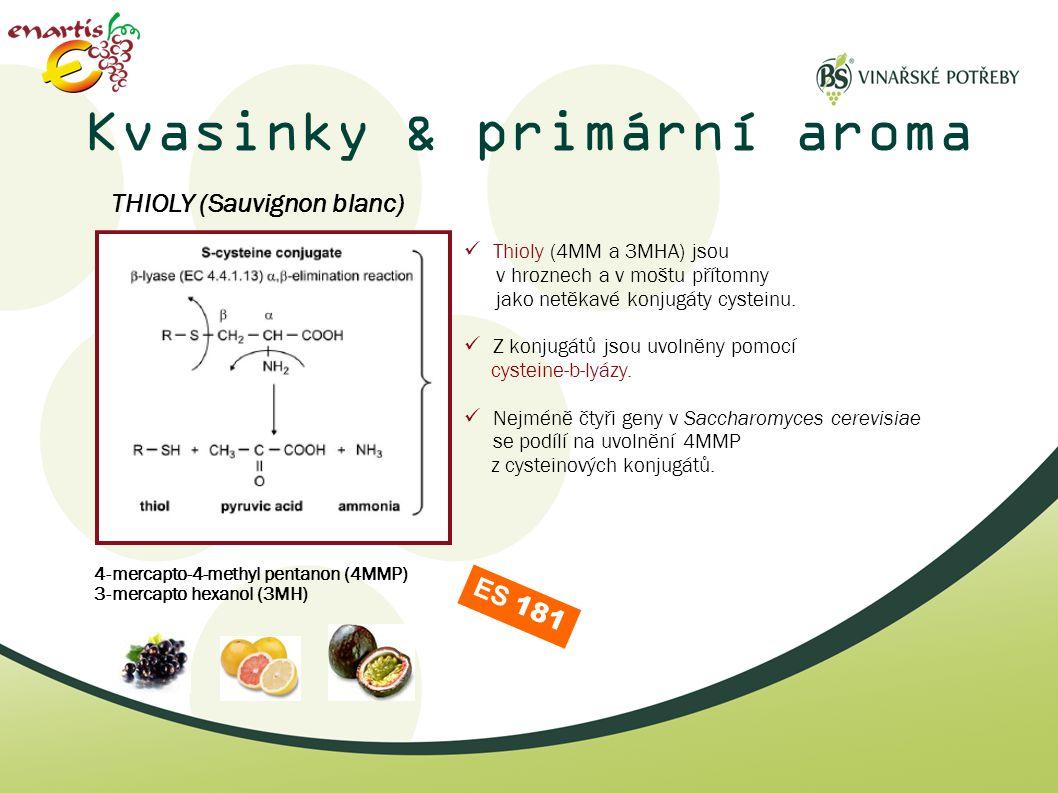 Kvasinky & primární aroma  Thioly (4MM a 3MHA) jsou v hroznech a v moštu přítomny jako netěkavé konjugáty cysteinu.  Z konjugátů jsou uvolněny pomoc