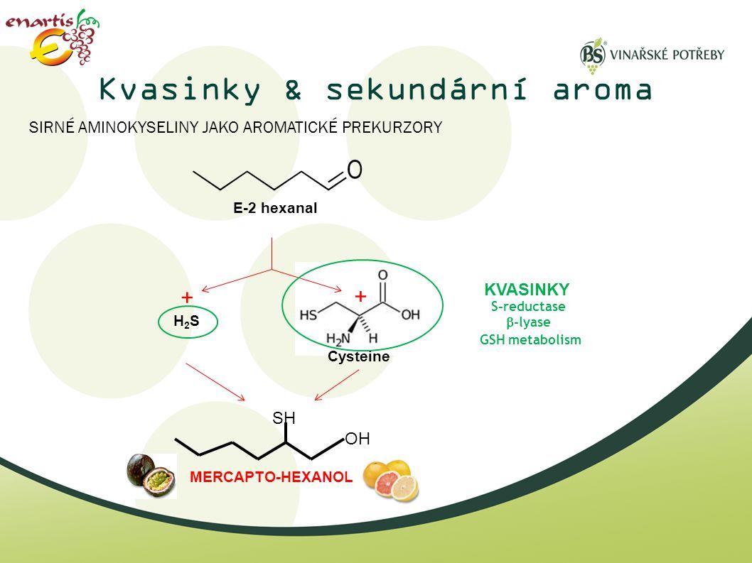 Kvasinky & sekundární aroma + Cysteine E-2 hexanal OH SH MERCAPTO-HEXANOL SIRNÉ AMINOKYSELINY JAKO AROMATICKÉ PREKURZORY H2SH2S + S-reductase  -lyase