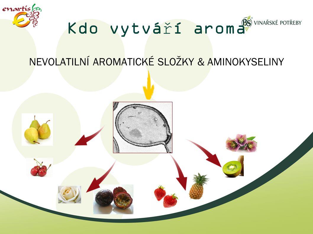 Kdo vytváří aroma NEVOLATILNÍ AROMATICKÉ SLOŽKY & AMINOKYSELINY