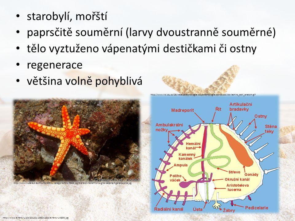 Lilijice • přisedlí • kalichovité tělo připomínající květy s pohyblivými rameny http://www.i-esprit.net/220-07i.jpg http://25.media.tumblr.com/tumblr_m5635i74711qmuedho1_400.jpg