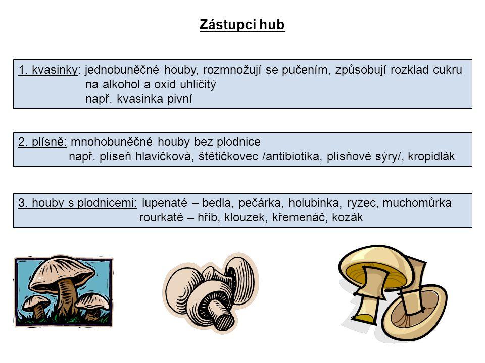ZÁSADY PRO SBĚR HUB 1.Sbírat jen jedlé houby, pokud možno nepoškozené.