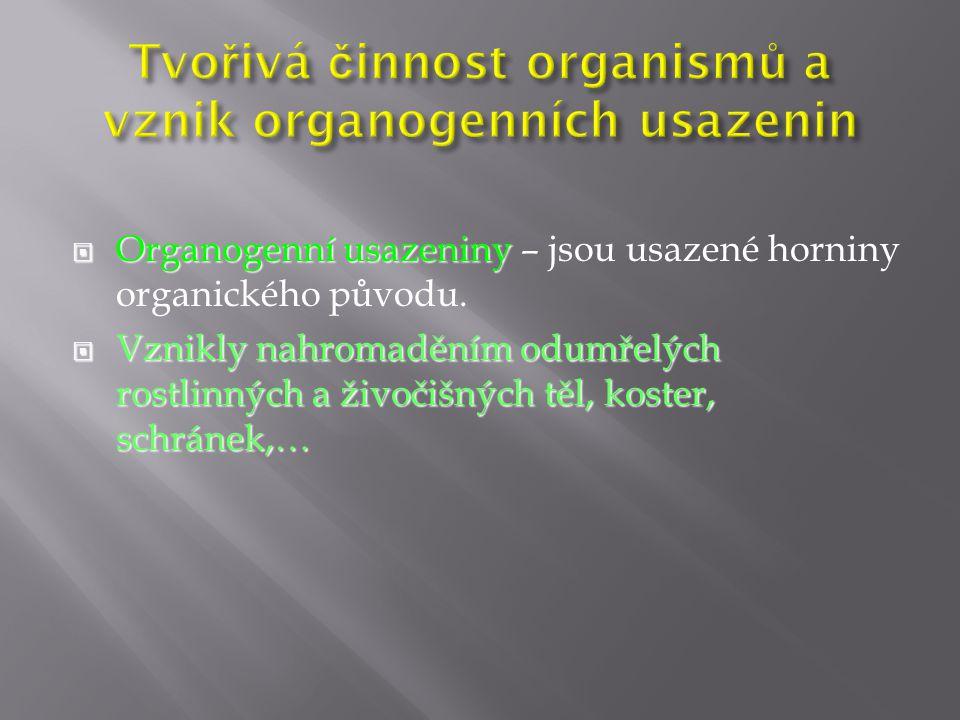  Organogenní usazeniny  Organogenní usazeniny – jsou usazené horniny organického původu.  Vznikly nahromaděním odumřelých rostlinných a živočišných