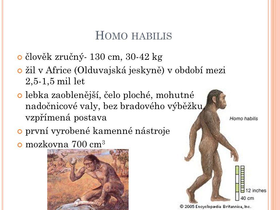 H OMO HABILIS člověk zručný- 130 cm, 30-42 kg žil v Africe (Olduvajská jeskyně) v období mezi 2,5-1,5 mil let lebka zaoblenější, čelo ploché, mohutné