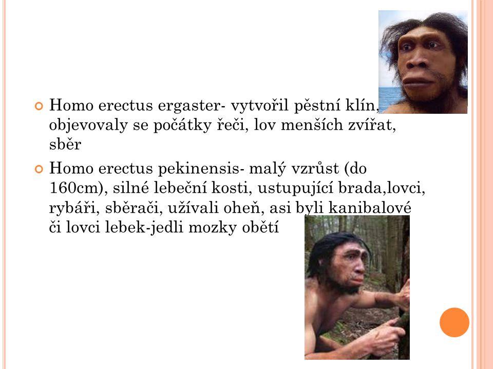Homo erectus ergaster- vytvořil pěstní klín, objevovaly se počátky řeči, lov menších zvířat, sběr Homo erectus pekinensis- malý vzrůst (do 160cm), silné lebeční kosti, ustupující brada,lovci, rybáři, sběrači, užívali oheň, asi byli kanibalové či lovci lebek-jedli mozky obětí