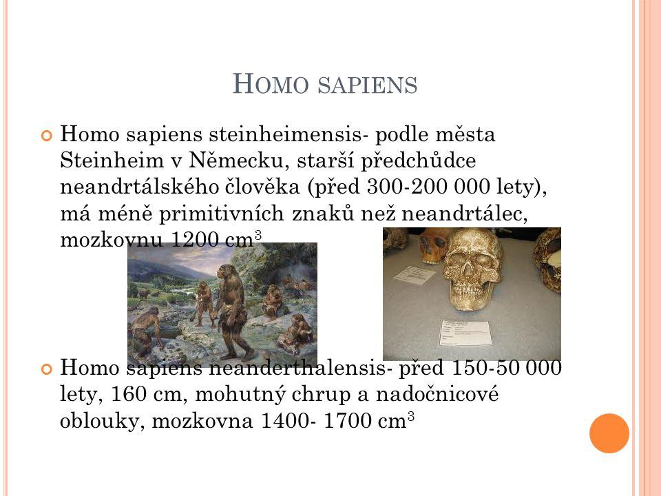 H OMO SAPIENS Homo sapiens steinheimensis- podle města Steinheim v Německu, starší předchůdce neandrtálského člověka (před 300-200 000 lety), má méně primitivních znaků než neandrtálec, mozkovnu 1200 cm 3 Homo sapiens neanderthalensis- před 150-50 000 lety, 160 cm, mohutný chrup a nadočnicové oblouky, mozkovna 1400- 1700 cm 3