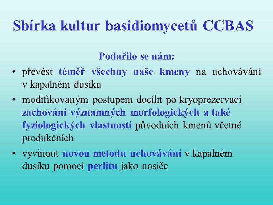 Sbírka kultur basidiomycetů CCBAS Podařilo se nám: •převést téměř všechny naše kmeny na uchovávání v kapalném dusíku •modifikovaným postupem docílit p