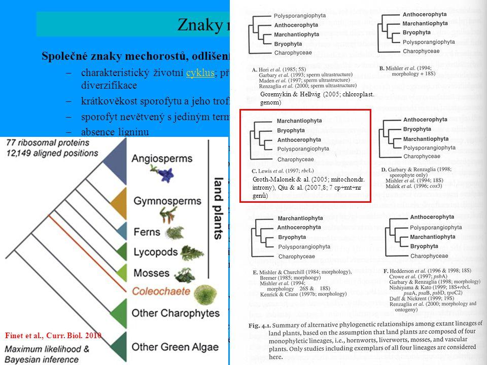 Znaky mechorostů Společné znaky mechorostů, odlišení ostatních vyš. rostlin ( Polysporangiophyta ) –charakteristický životní cyklus; převaha gametofyt