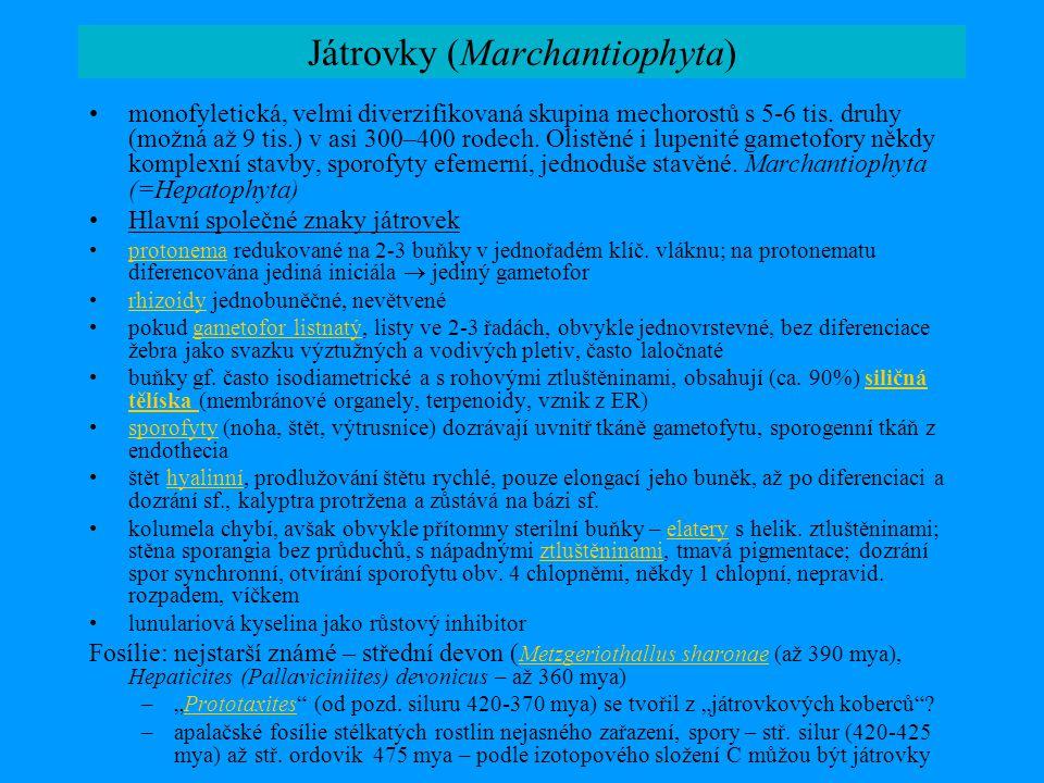 Játrovky (Marchantiophyta) •monofyletická, velmi diverzifikovaná skupina mechorostů s 5-6 tis. druhy (možná až 9 tis.) v asi 300–400 rodech. Olistěné
