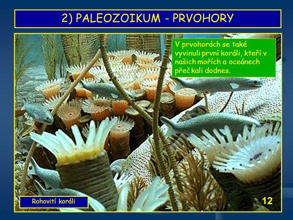 2) PALEOZOIKUM - PRVOHORY Rohovití koráli 12 V prvohorách se také vyvinuli první koráli, kteří v našich mořích a oceánech přečkali dodnes.