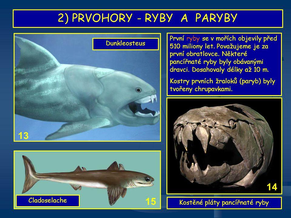 2) PRVOHORY - RYBY A PARYBY První ryby se v mořích objevily před 510 miliony let. Považujeme je za první obratlovce. Některé pancířnaté ryby byly obáv