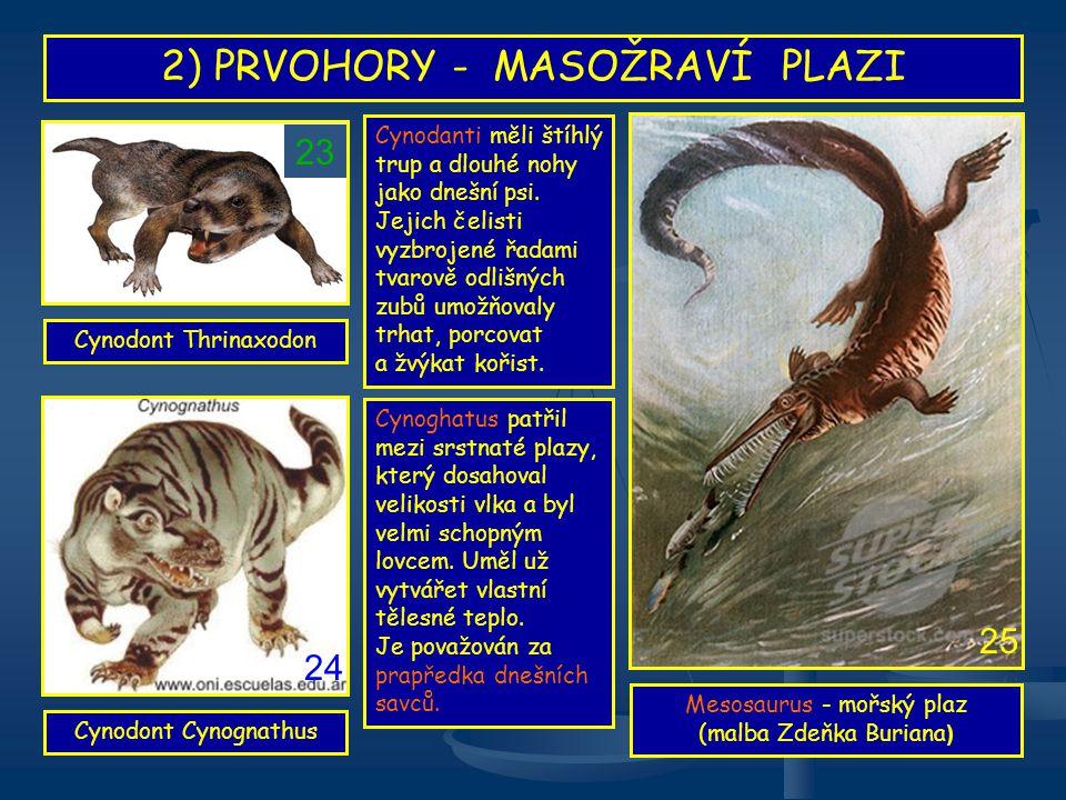 2) PRVOHORY - MASOŽRAVÍ PLAZI Mesosaurus - mořský plaz (malba Zdeňka Buriana ) Cynoghatus patřil mezi srstnaté plazy, který dosahoval velikosti vlka a