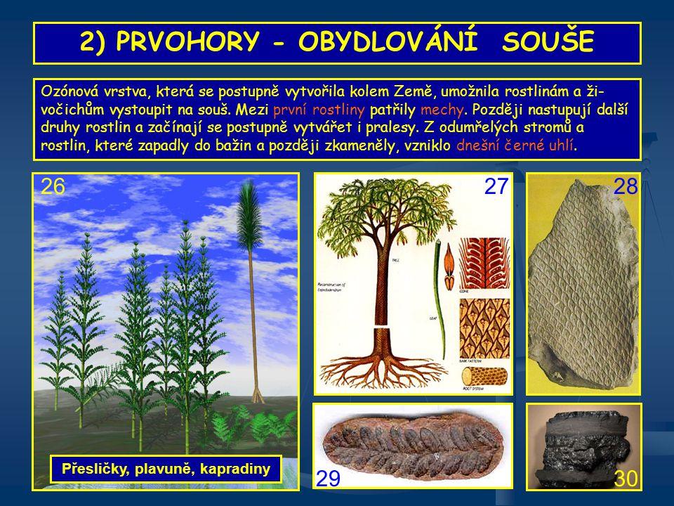 OTÁZKY K OPAKOVÁNÍ Které prvohorní rostliny zvýšily výrobu kyslíku?
