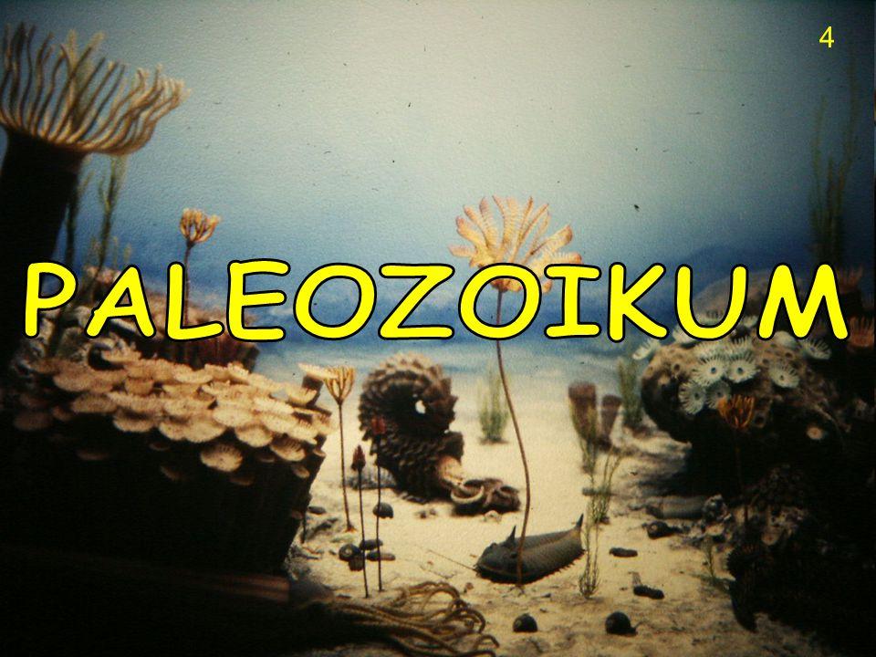 2) PALEOZOIKUM - PRVOHORY • na začátku prvohor se objevují vícebuněční žívočichové, kteří nemají vnější schránky - připomínají dnešní medúzy ( Ediacara ) a tzv.