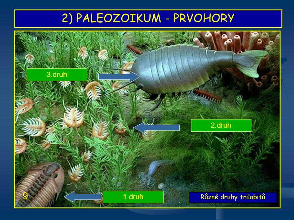 2) PALEOZOIKUM - PRVOHORY Hlavonožci 10 Hlavonožec požírající trilobita Další druh hlavonožce
