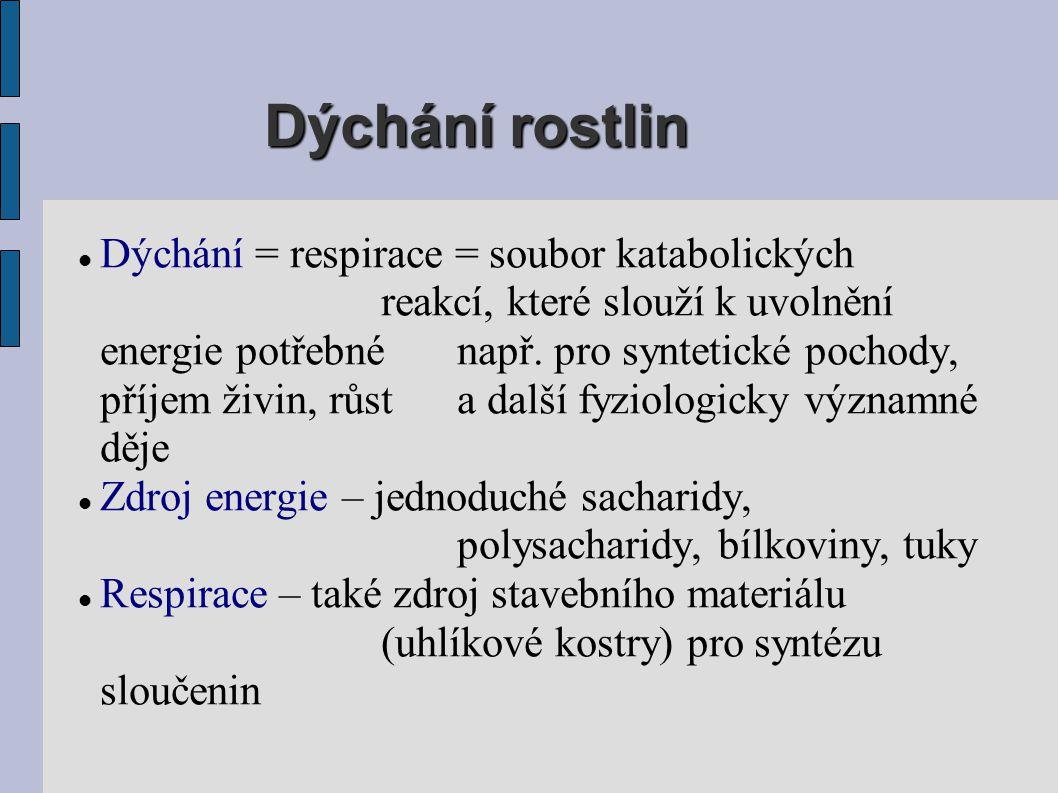 Dýchání rostlin  Dýchání = respirace = soubor katabolických reakcí, které slouží k uvolnění energie potřebné např. pro syntetické pochody, příjem živ