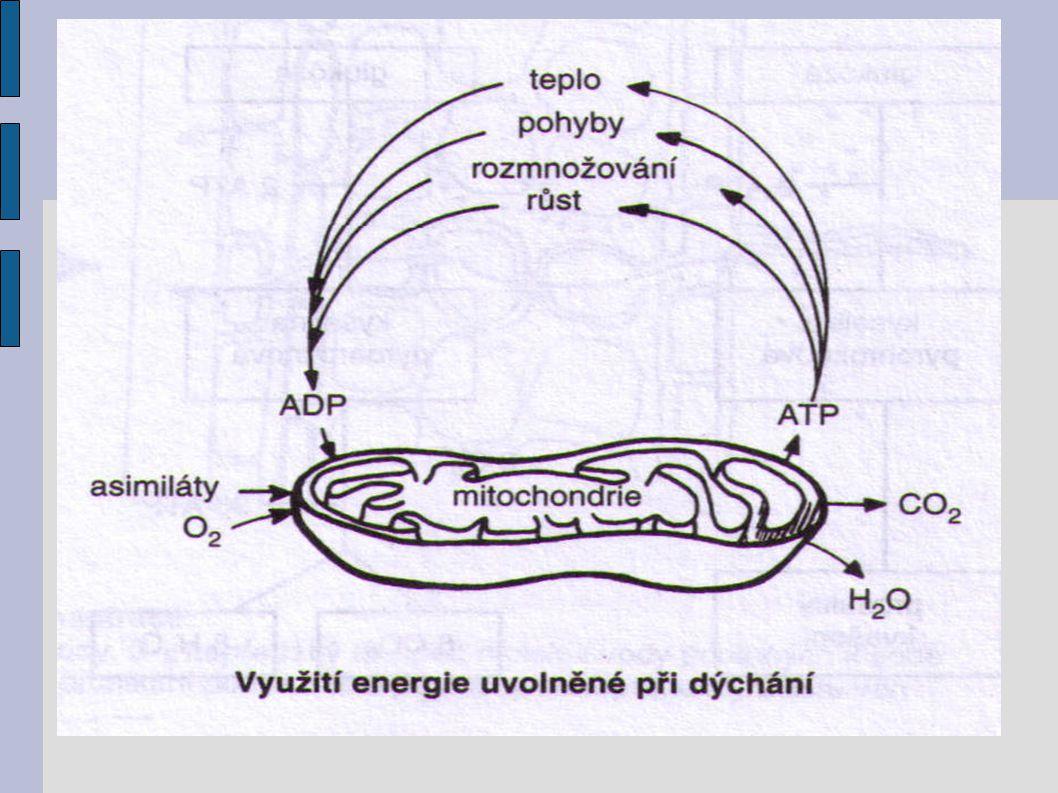 Vypracovala: Nikola Mojžíšová, oktáva Zdroje: Biologie pro gymnázia, J.