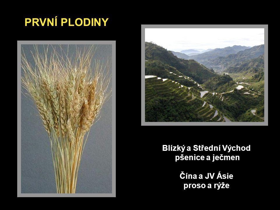 Blízký a Střední Východ pšenice a ječmen Čína a JV Ásie proso a rýže PRVNÍ PLODINY