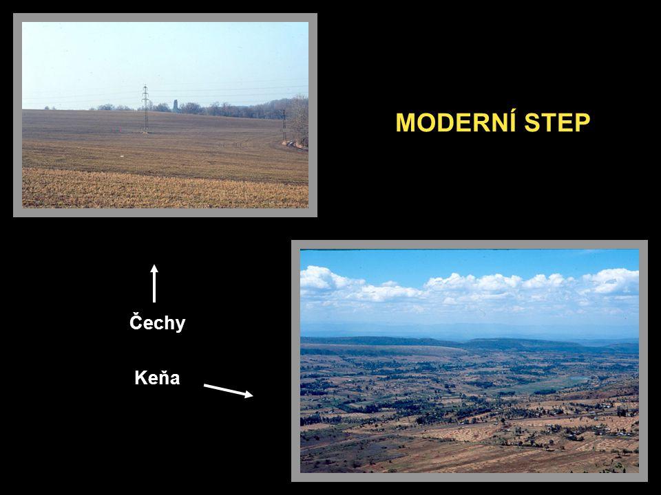 MODERNÍ STEP Čechy Keňa