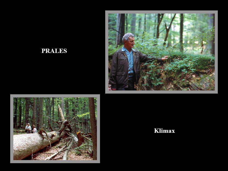 PRALES Klimax